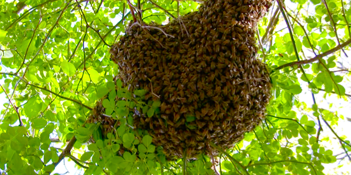 Hive reproduction